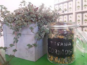 tisana-corniola5